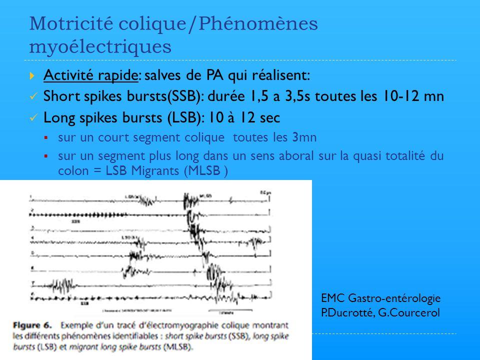 Motricité colique/Phénomènes myoélectriques  Activité rapide: salves de PA qui réalisent: Short spikes bursts(SSB): durée 1,5 a 3,5s toutes les 10-12