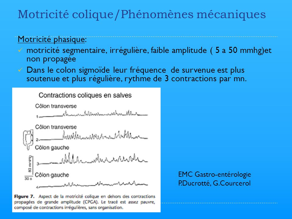 Motricité colique/Phénomènes mécaniques Motricité phasique: motricité segmentaire, irrégulière, faible amplitude ( 5 a 50 mmhg)et non propagée Dans le