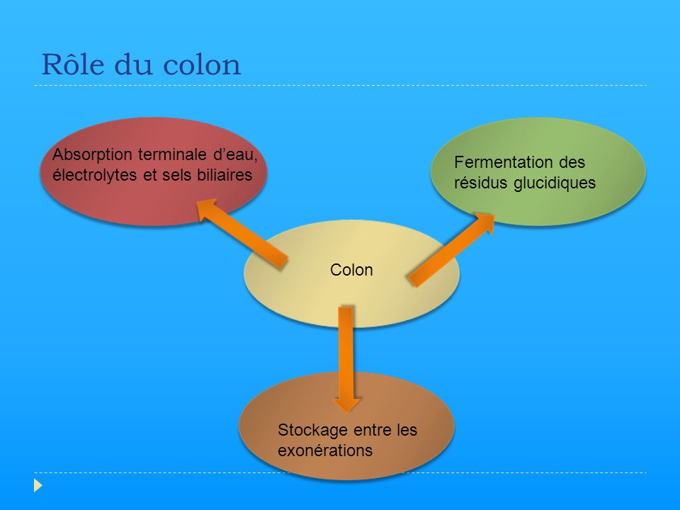 Rôle du colon Colon Absorption terminale d'eau, électrolytes et sels biliaires Fermentation des résidus glucidiques Stockage entre les exonérations