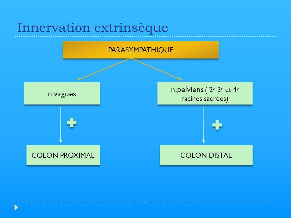 Innervation extrinsèque SYMPATHIQUE ( T10 à L2 ) n.splanchniques n.Lombaires coliques n.hypogastriques COLON PROXIMAL CADRE COLIQUE SPHINCTER ANAL