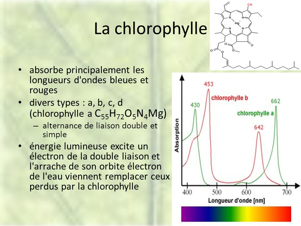 La chlorophylle absorbe principalement les longueurs d ondes bleues et rouges divers types : a, b, c, d (chlorophylle a C 55 H 72 O 5 N 4 Mg) – alternance de liaison double et simple énergie lumineuse excite un électron de la double liaison et l arrache de son orbite électron de l eau viennent remplacer ceux perdus par la chlorophylle
