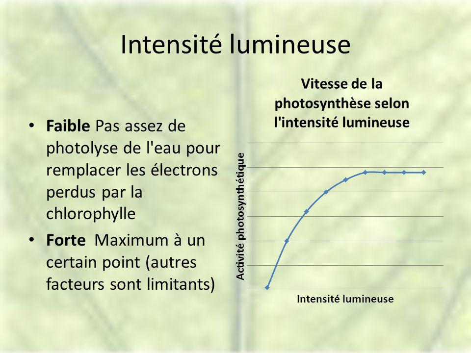 Intensité lumineuse Faible Pas assez de photolyse de l eau pour remplacer les électrons perdus par la chlorophylle Forte Maximum à un certain point (autres facteurs sont limitants)