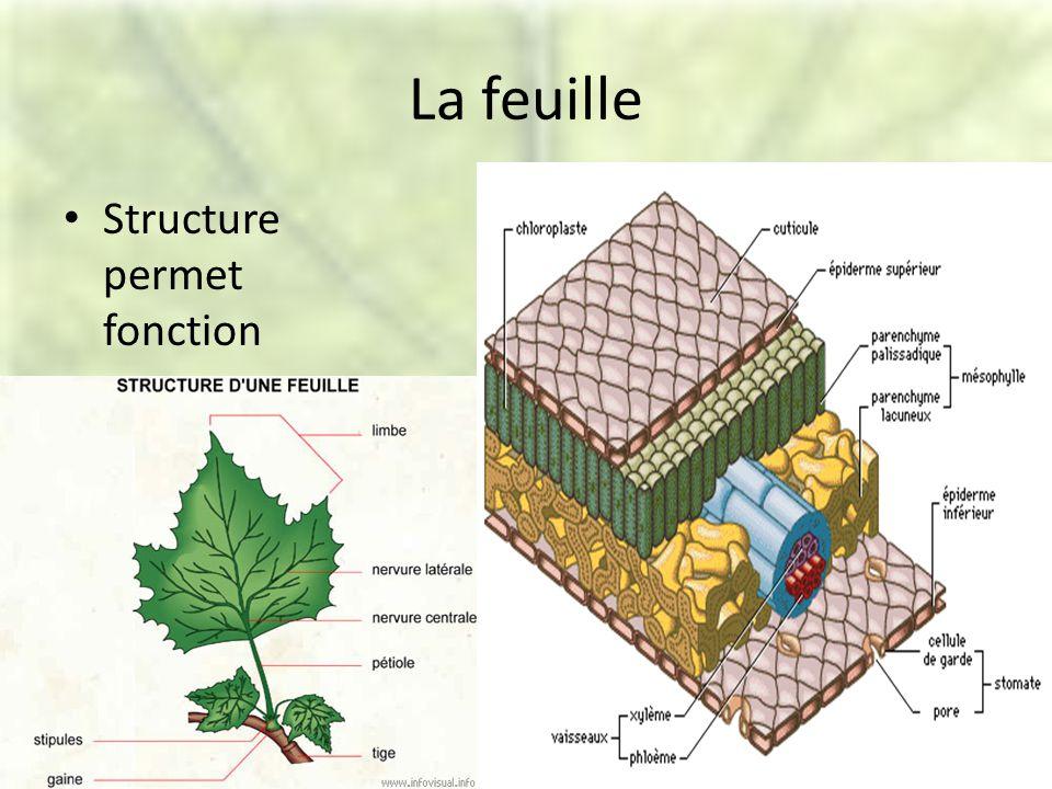 La feuille Structure permet fonction