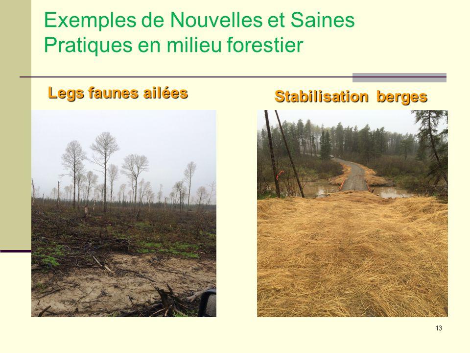 13 Exemples de Nouvelles et Saines Pratiques en milieu forestier Legs faunes ailées Stabilisation berges