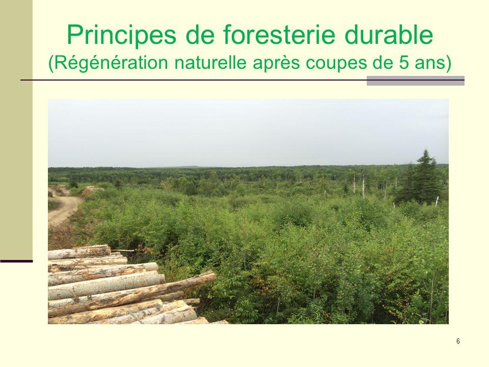 6 Principes de foresterie durable (Régénération naturelle après coupes de 5 ans)