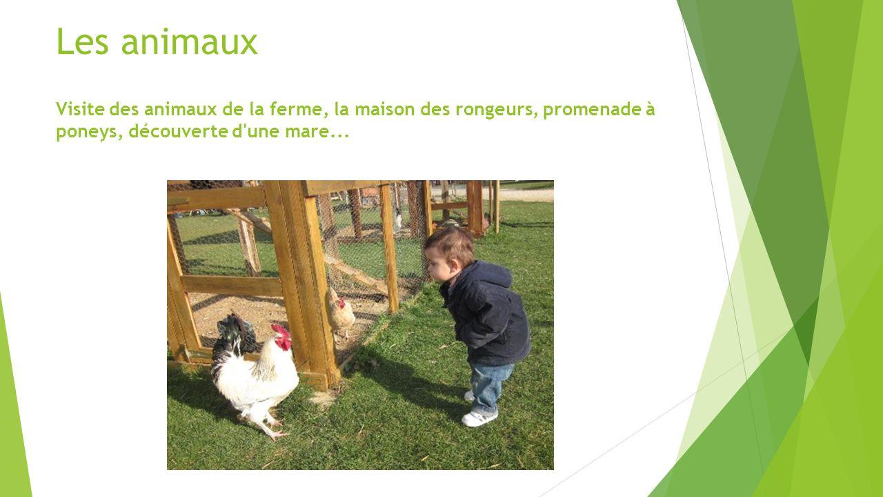Les animaux Visite des animaux de la ferme, la maison des rongeurs, promenade à poneys, découverte d'une mare...