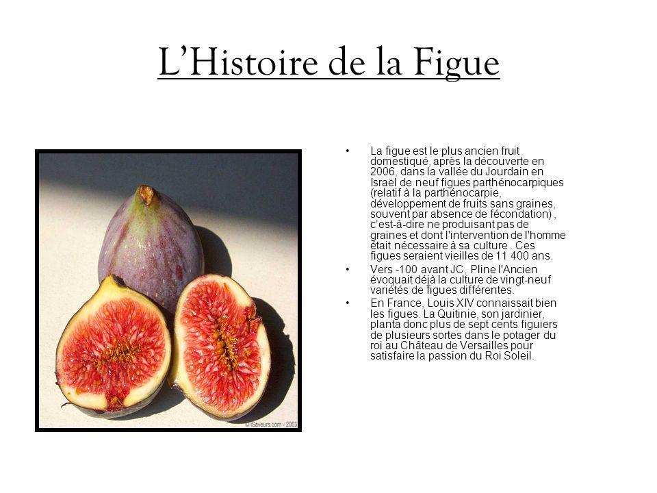 L'Histoire de la Figue La figue est le plus ancien fruit domestiqué, après la découverte en 2006, dans la vallée du Jourdain en Israël de neuf figues