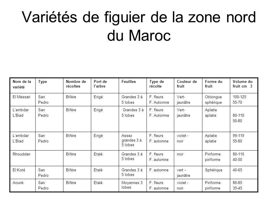 Variétés de figuier de la zone nord du Maroc Nom de la variété TypeNombre de récoltes Port de l'arbre FeuillesType de récolte Couleur de fruit Forme d