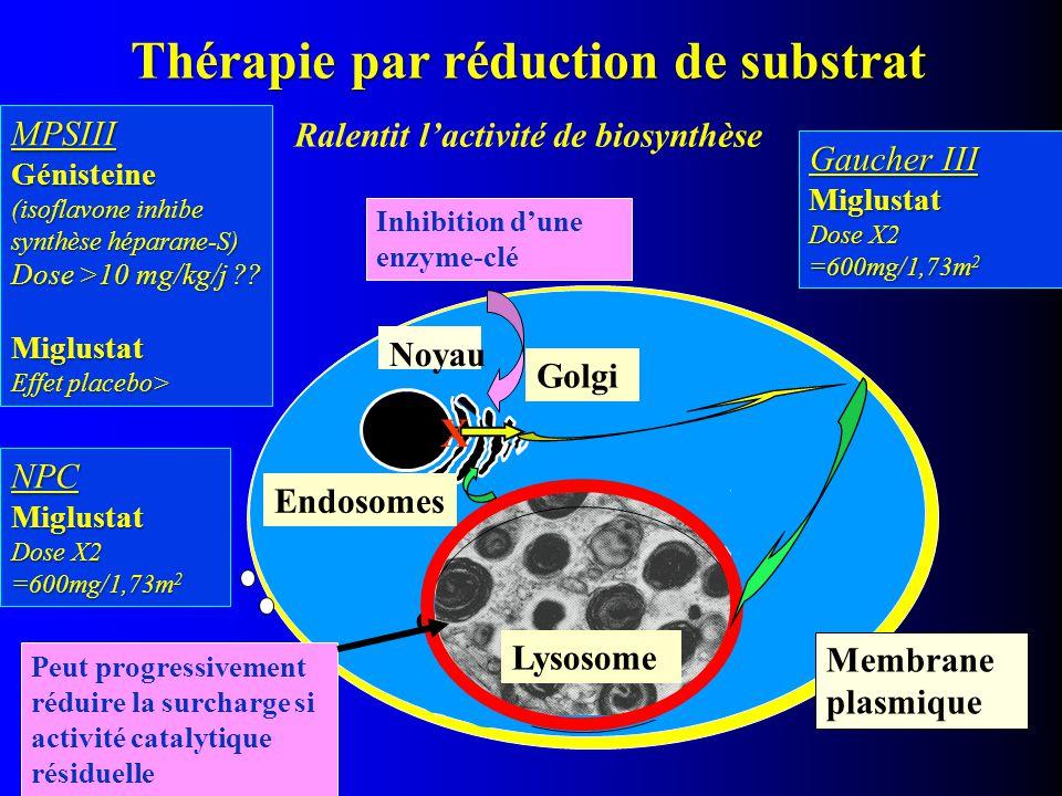 Noyau dégradation enzymatique Membrane plasmique Thérapie par réduction de substrat Ralentit l'activité de biosynthèse Inhibition d'une enzyme-clé Lys