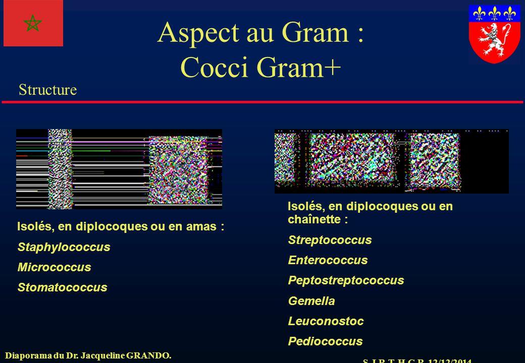 S.J.R.T. H.C.R. 12/12/2014 Structure Diaporama du Dr. Jacqueline GRANDO. Aspect au Gram : Cocci Gram+ Isolés, en diplocoques ou en amas : Staphylococc