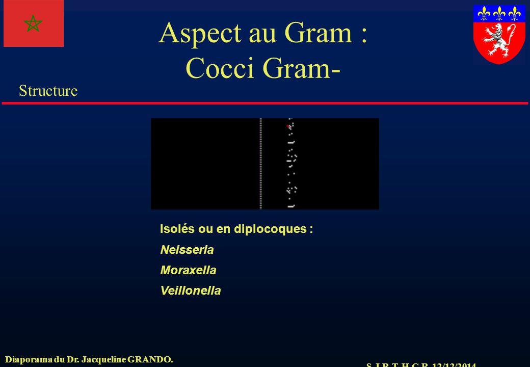 S.J.R.T. H.C.R. 12/12/2014 Structure Diaporama du Dr. Jacqueline GRANDO. Aspect au Gram : Cocci Gram- Isolés ou en diplocoques : Neisseria Moraxella V