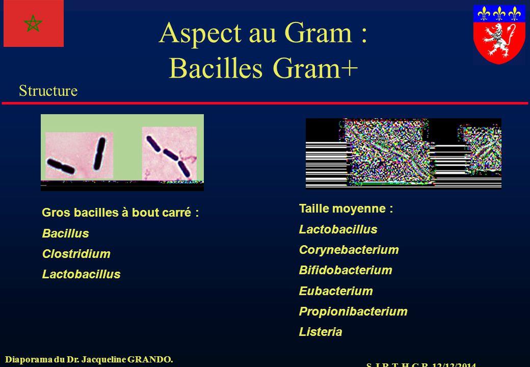 S.J.R.T. H.C.R. 12/12/2014 Structure Diaporama du Dr. Jacqueline GRANDO. Aspect au Gram : Bacilles Gram+ Gros bacilles à bout carré : Bacillus Clostri