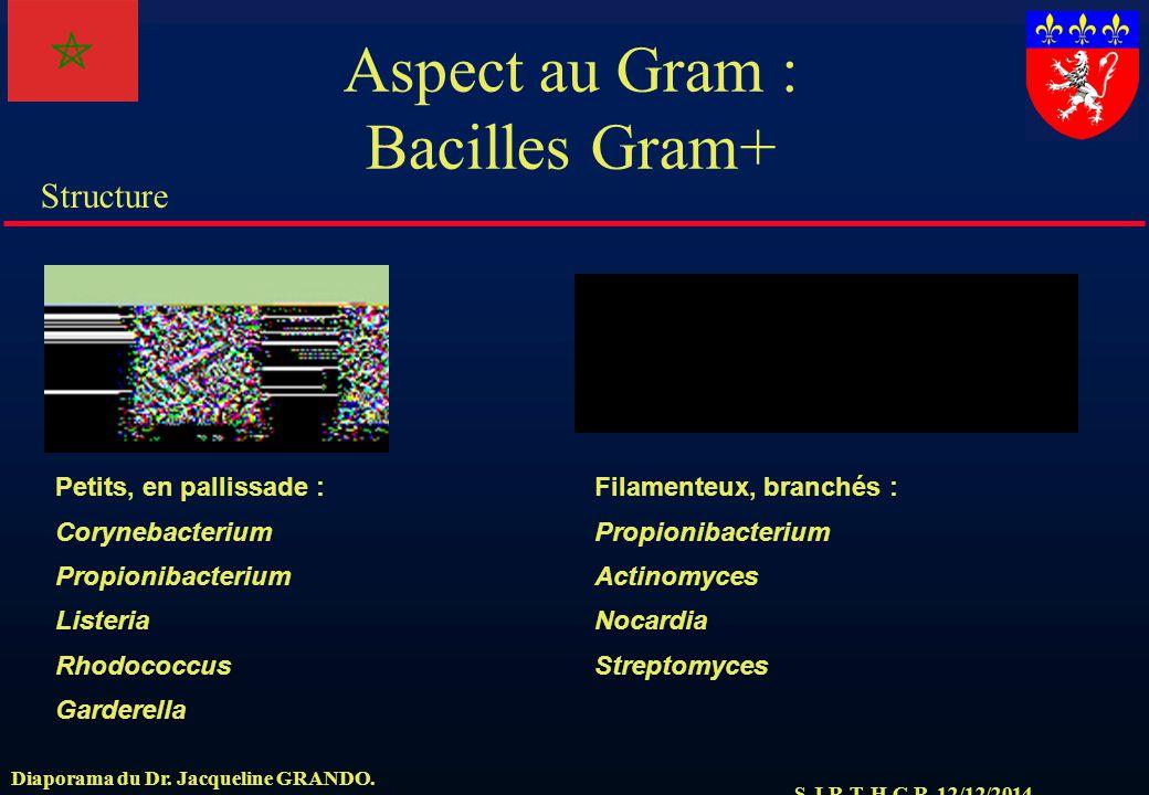 S.J.R.T. H.C.R. 12/12/2014 Structure Diaporama du Dr. Jacqueline GRANDO. Aspect au Gram : Bacilles Gram+ Petits, en pallissade : Corynebacterium Propi