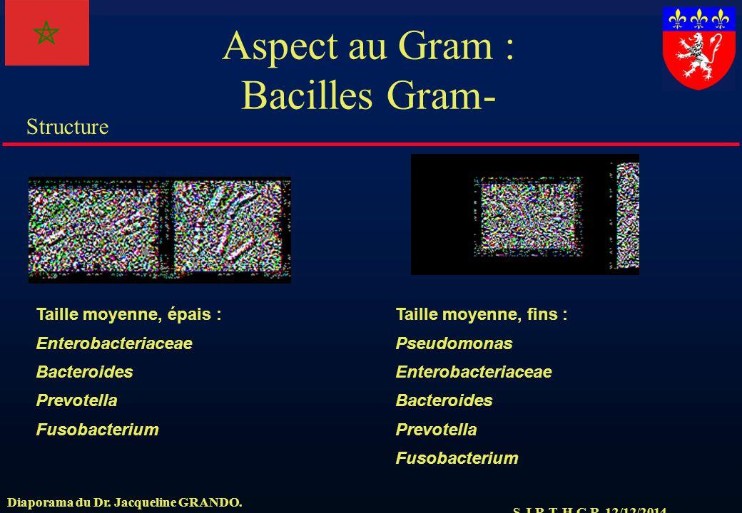 S.J.R.T. H.C.R. 12/12/2014 Structure Diaporama du Dr. Jacqueline GRANDO. Aspect au Gram : Bacilles Gram- Taille moyenne, épais : Enterobacteriaceae Ba