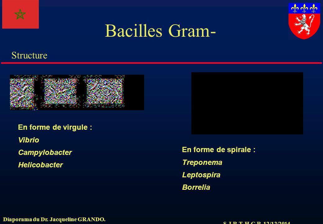 S.J.R.T. H.C.R. 12/12/2014 Structure Diaporama du Dr. Jacqueline GRANDO. Bacilles Gram- En forme de virgule : Vibrio Campylobacter Helicobacter En for