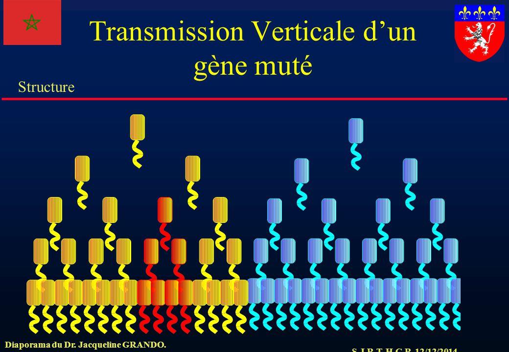S.J.R.T. H.C.R. 12/12/2014 Structure Diaporama du Dr. Jacqueline GRANDO. Transmission Verticale d'un gène muté