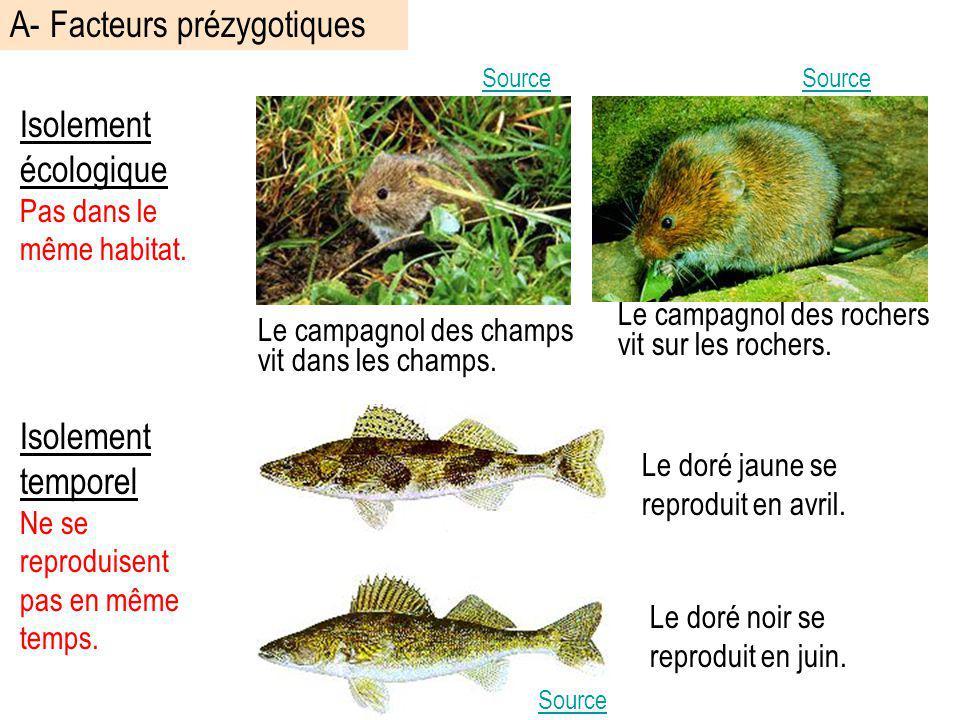 Isolement écologique Pas dans le même habitat. Source Le doré jaune se reproduit en avril. Le doré noir se reproduit en juin. Isolement temporel Ne se