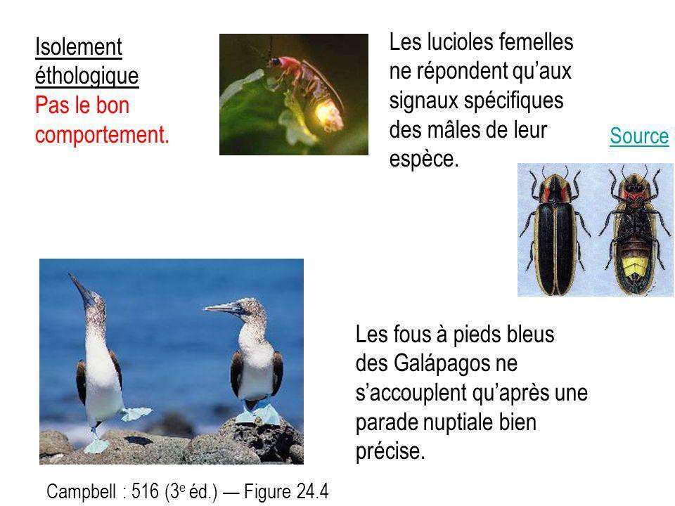 Isolement éthologique Pas le bon comportement. Campbell : 516 (3 e éd.) — Figure 24.4 Les fous à pieds bleus des Galápagos ne s'accouplent qu'après un