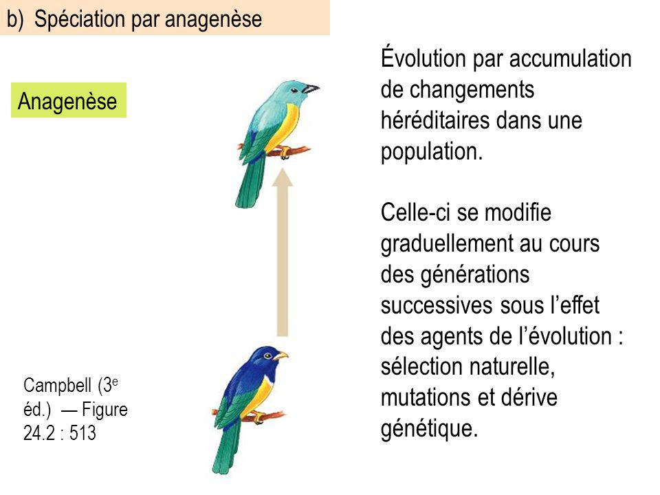 Évolution par accumulation de changements héréditaires dans une population. Celle-ci se modifie graduellement au cours des générations successives sou