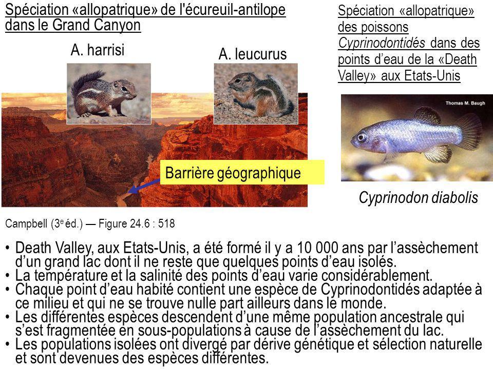 Spéciation «allopatrique» de l'écureuil-antilope dans le Grand Canyon Campbell (3 e éd.) — Figure 24.6 : 518 A. harrisi A. leucurus Spéciation «allopa