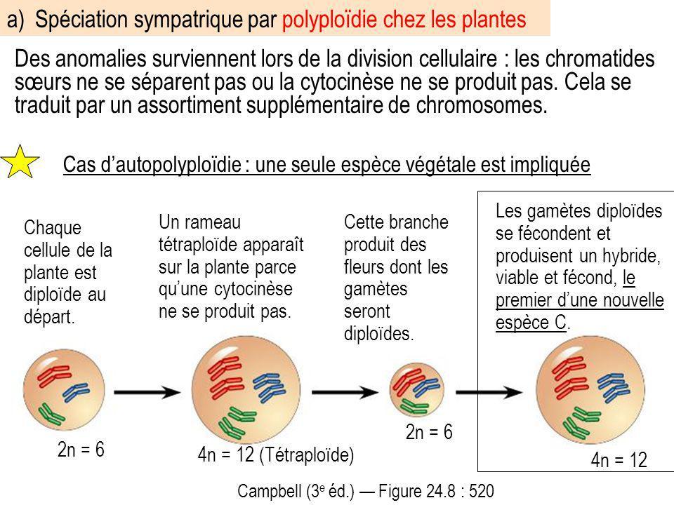 Des anomalies surviennent lors de la division cellulaire : les chromatides sœurs ne se séparent pas ou la cytocinèse ne se produit pas. Cela se tradui