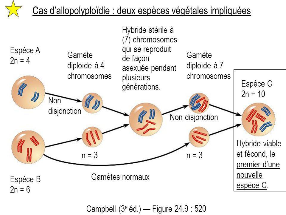 Cas d'allopolyploïdie : deux espèces végétales impliquées Espèce A 2n = 4 Gamète diploïde à 4 chromosomes Gamètes normaux Hybride stérile à (7) chromo