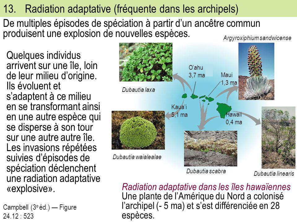 13.Radiation adaptative (fréquente dans les archipels) Quelques individus arrivent sur une île, loin de leur milieu d'origine. Ils évoluent et s'adapt