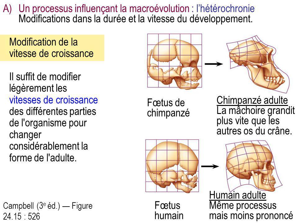 Campbell (3 e éd.) — Figure 24.15 : 526 Il suffit de modifier légèrement les vitesses de croissance des différentes parties de l'organisme pour change