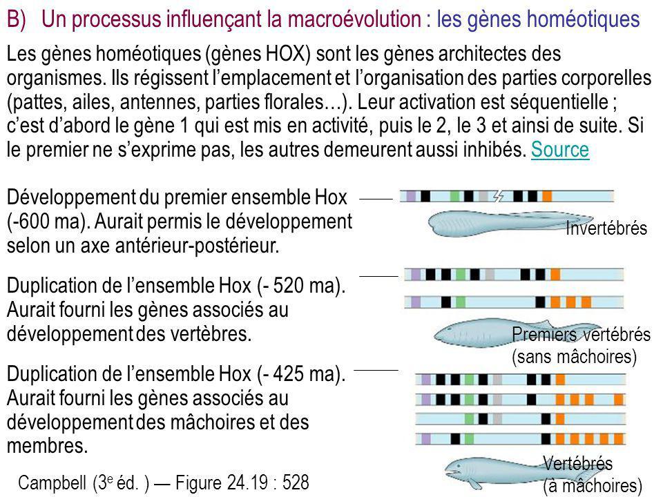 Les gènes homéotiques (gènes HOX) sont les gènes architectes des organismes. Ils régissent l'emplacement et l'organisation des parties corporelles (pa