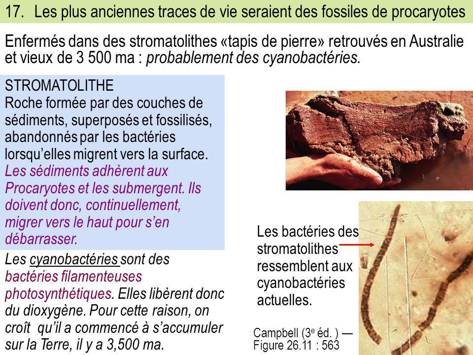 17.Les plus anciennes traces de vie seraient des fossiles de procaryotes Campbell (3 e éd. ) — Figure 26.11 : 563 STROMATOLITHE Roche formée par des c
