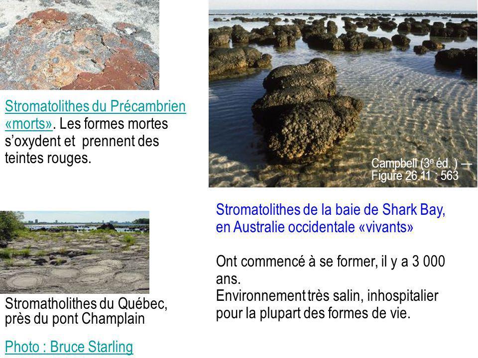 Stromatolithes du Précambrien «morts»Stromatolithes du Précambrien «morts». Les formes mortes s'oxydent et prennent des teintes rouges. Stromatolithes