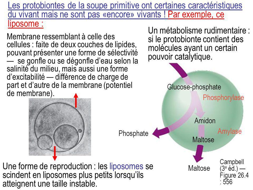 Les protobiontes de la soupe primitive ont certaines caractéristiques du vivant mais ne sont pas «encore» vivants ! Par exemple, ce liposome : Membran