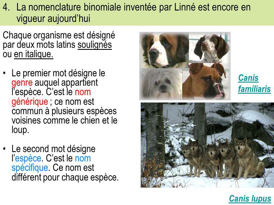 4.La nomenclature binomiale inventée par Linné est encore en vigueur aujourd'hui Chaque organisme est désigné par deux mots latins soulignés ou en ita