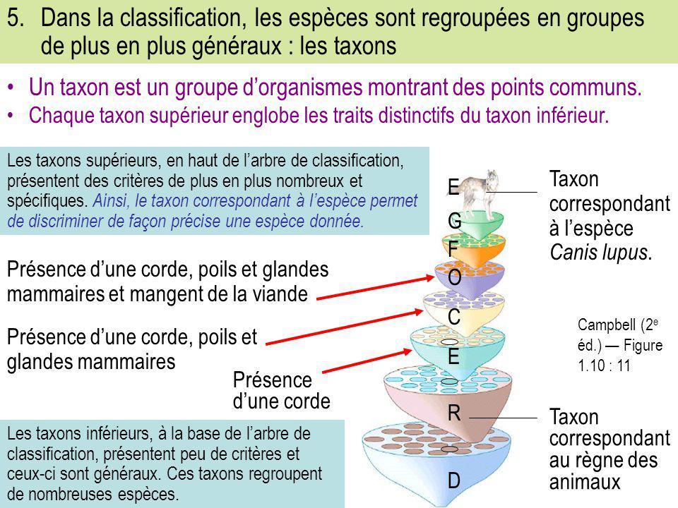 5.Dans la classification, les espèces sont regroupées en groupes de plus en plus généraux : les taxons Campbell (2 e éd.) — Figure 1.10 : 11 Les taxon