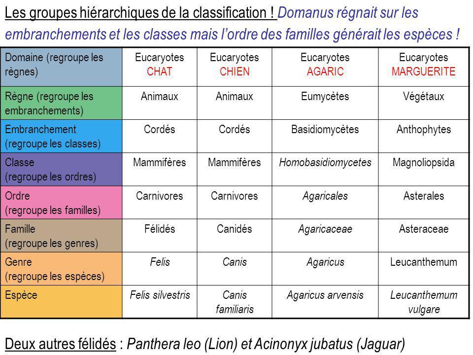 Les groupes hiérarchiques de la classification ! Domanus régnait sur les embranchements et les classes mais l'ordre des familles générait les espèces