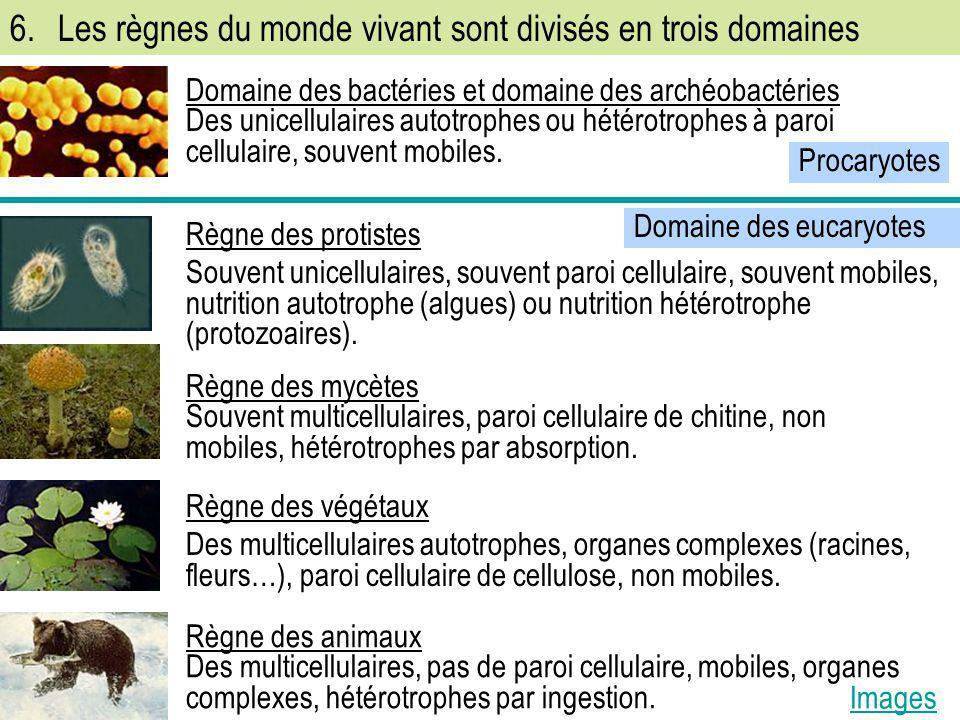 Domaine des eucaryotes 6.Les règnes du monde vivant sont divisés en trois domaines Domaine des bactéries et domaine des archéobactéries Des unicellula