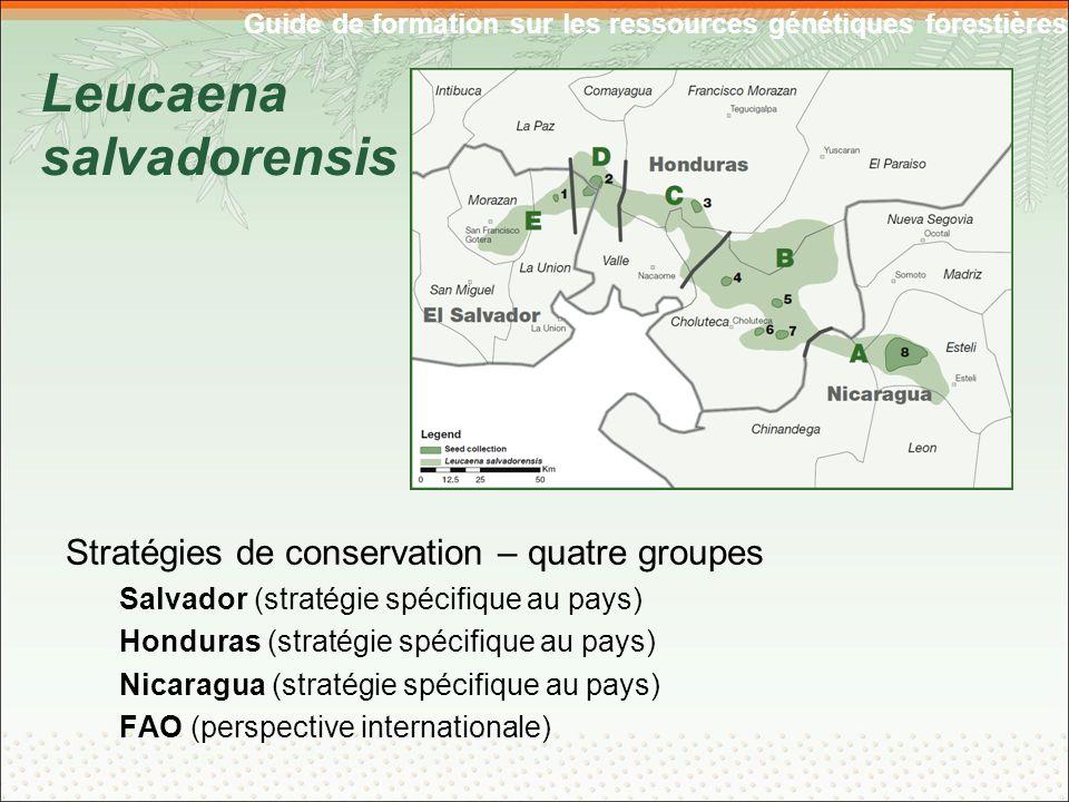 Guide de formation sur les ressources génétiques forestières Leucaena salvadorensis Stratégies de conservation – quatre groupes Salvador (stratégie spécifique au pays) Honduras (stratégie spécifique au pays) Nicaragua (stratégie spécifique au pays) FAO (perspective internationale)