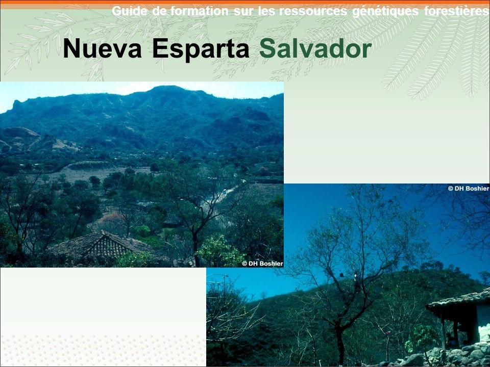 Guide de formation sur les ressources génétiques forestières Nueva Esparta Salvador