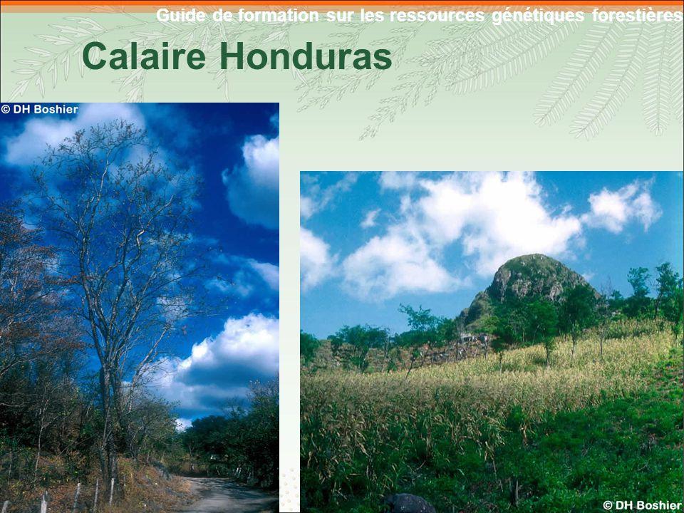 Guide de formation sur les ressources génétiques forestières Calaire Honduras 4