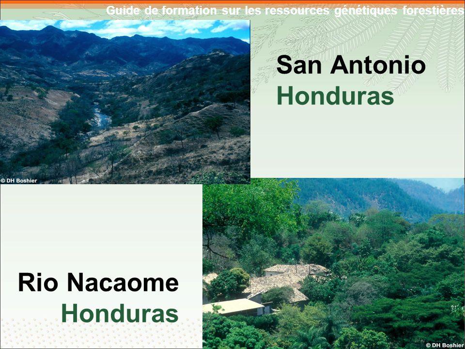 Guide de formation sur les ressources génétiques forestières San Antonio Honduras Rio Nacaome Honduras 5