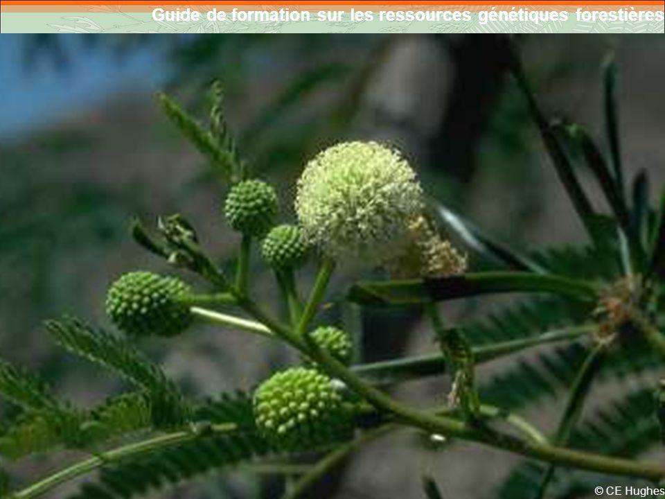 Guide de formation sur les ressources génétiques forestières 6 © CE Hughes