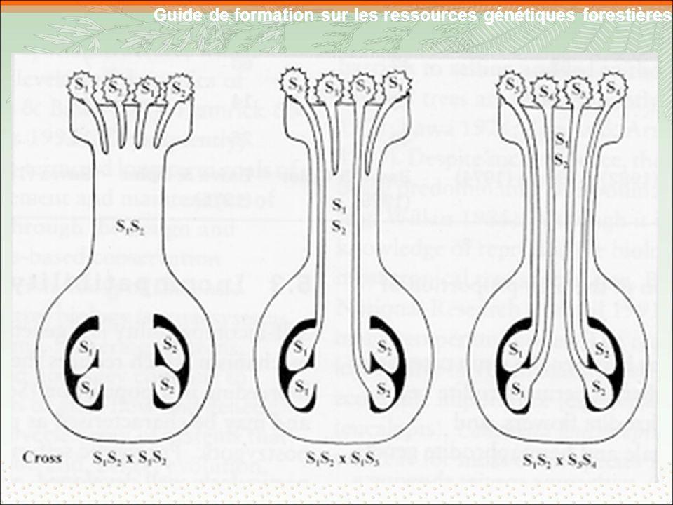 Guide de formation sur les ressources génétiques forestières