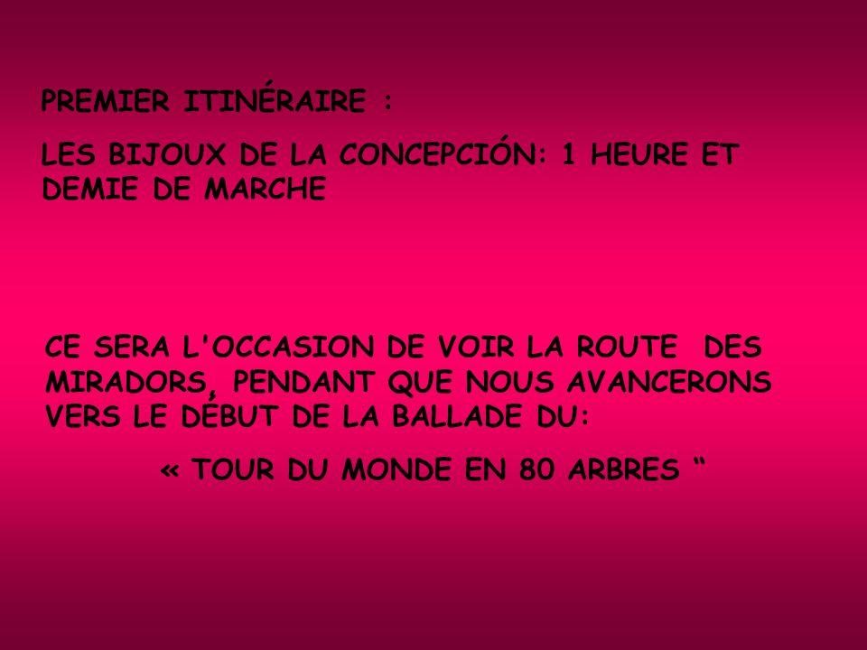 PREMIER ITINÉRAIRE : LES BIJOUX DE LA CONCEPCIÓN: 1 HEURE ET DEMIE DE MARCHE CE SERA L OCCASION DE VOIR LA ROUTE DES MIRADORS, PENDANT QUE NOUS AVANCERONS VERS LE DÉBUT DE LA BALLADE DU: « TOUR DU MONDE EN 80 ARBRES