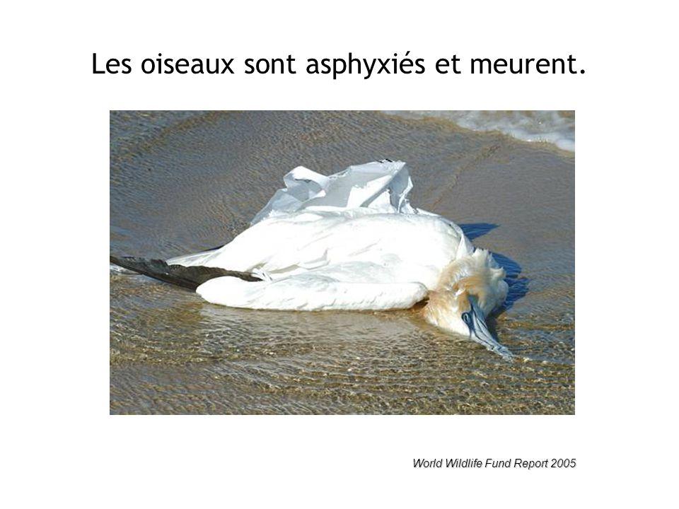 Les oiseaux sont asphyxiés et meurent. World Wildlife Fund Report 2005