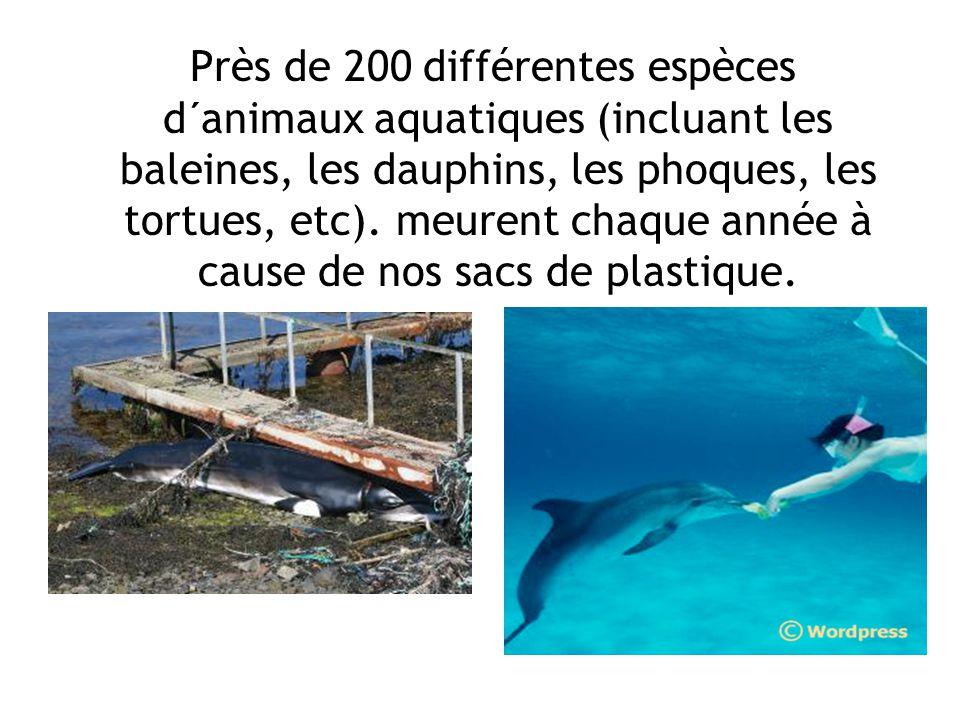 Près de 200 différentes espèces d´animaux aquatiques (incluant les baleines, les dauphins, les phoques, les tortues, etc).