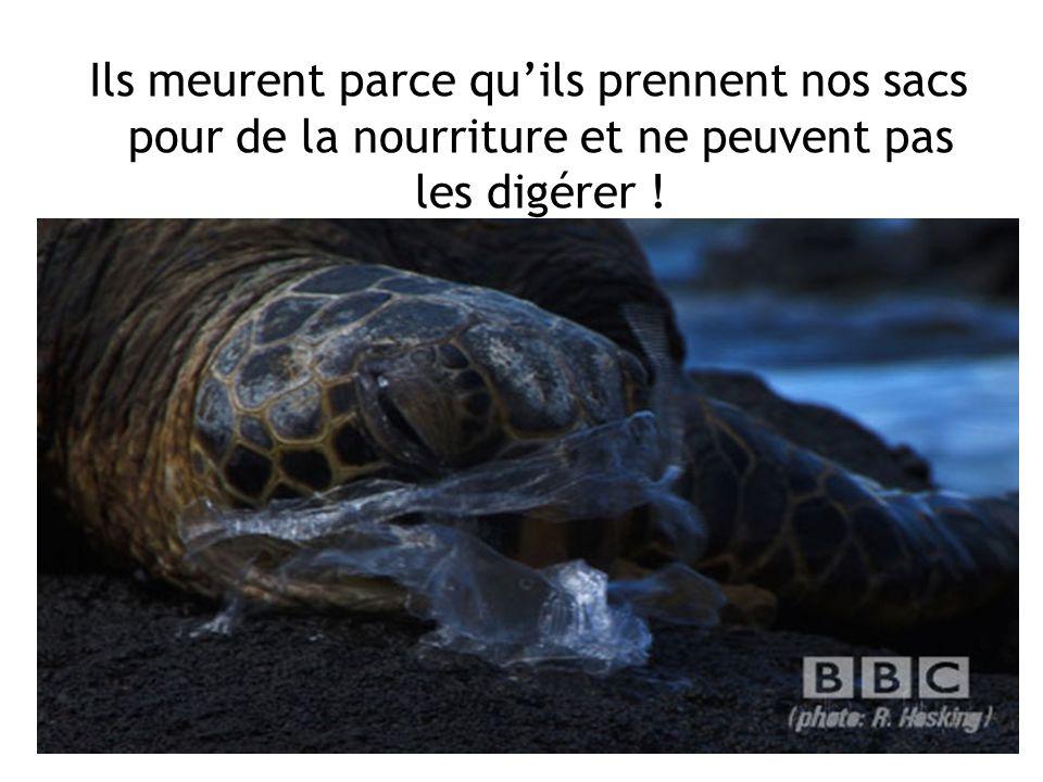 Ils meurent parce qu'ils prennent nos sacs pour de la nourriture et ne peuvent pas les digérer !