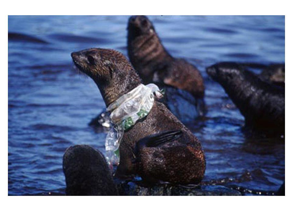 Les sacs font leurs chemins vers la mer en passant par les égouts et les drains.