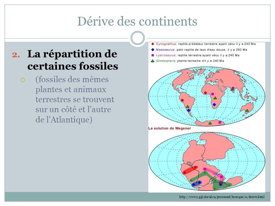 Dérive des continents 2. La répartition de certaines fossiles  (fossiles des mêmes plantes et animaux terrestres se trouvent sur un côté et l'autre d