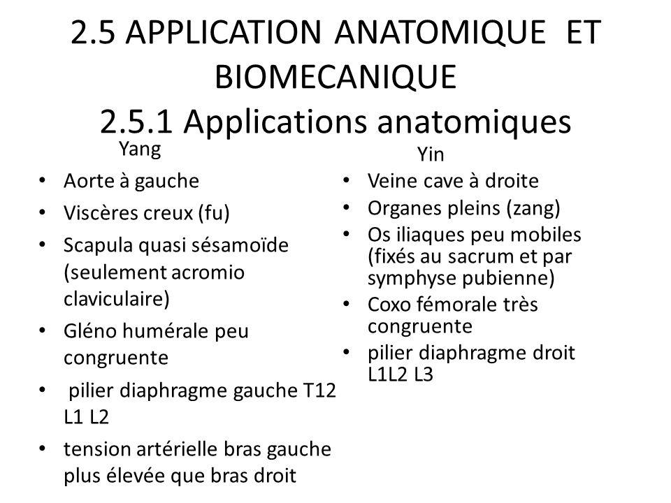 2.5 APPLICATION ANATOMIQUE ET BIOMECANIQUE 2.5.1 Applications anatomiques Yang Aorte à gauche Viscères creux (fu) Scapula quasi sésamoïde (seulement a