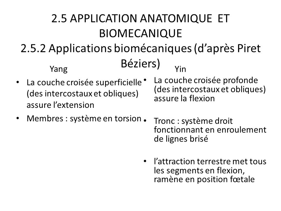 2.5 APPLICATION ANATOMIQUE ET BIOMECANIQUE 2.5.2 Applications biomécaniques (d'après Piret Béziers) Yang La couche croisée superficielle (des intercos